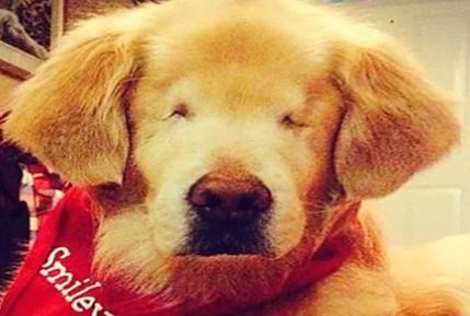 盲目犬スマイリー